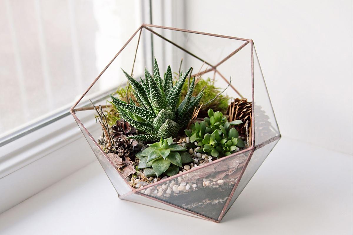 Air Plant Terrarium Diy Create A Beautiful Miniature Garden In Glass