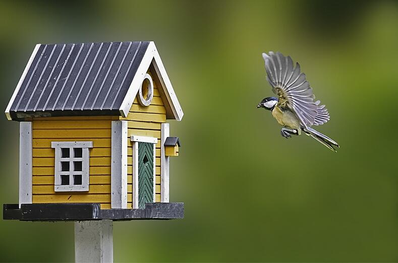 Where to put a birdhouse