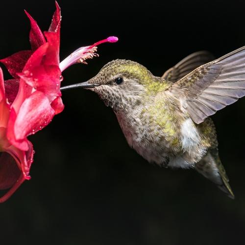 Create a Magical Buzzing Backyard with Hummingbird Nectar